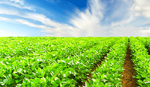 agricultural-solar-solutions-pakistan